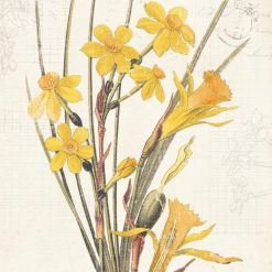 Illustrazione vintage narciso