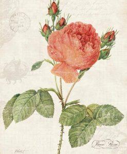 Illustrazione vintage rosa