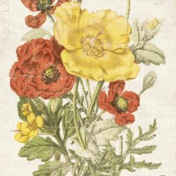 Illustrazione vintage di un mazzo di papaveri