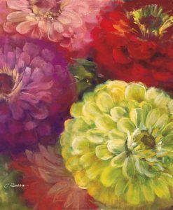 Zinnia di diversi colori