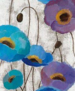 Anemoni di diversi colori