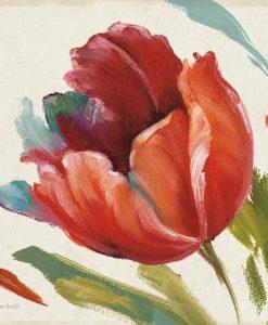 Tulipano dai colori accesi