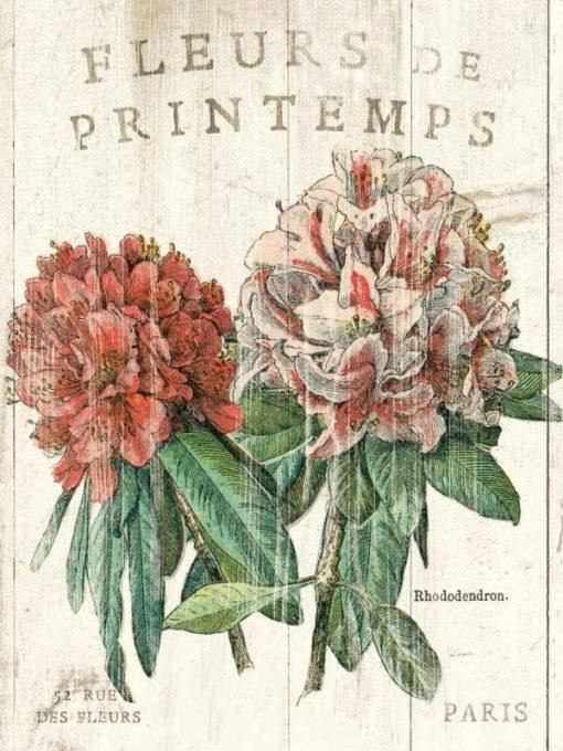 Illustrazione vintage di un rododendro
