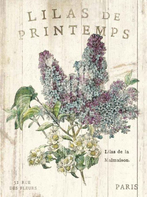 Illustrazione vintage di un lillà