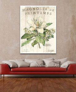 Ambientazione Illustrazione vintage di un magnolia