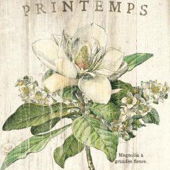 Illustrazione vintage di un magnolia