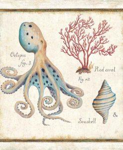 Illustrazioni enciclopediche di elementi marini