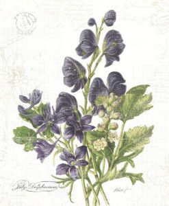 botanica-botany-delphinium-lilac