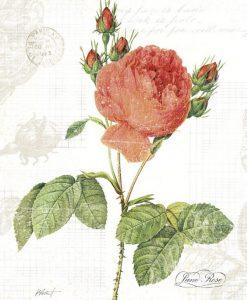 Illustrazione botanica di un delphinium