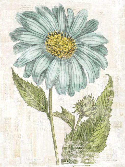 Illustrazione vintage con fiore di campo azzurri