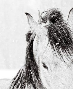 Dettaglio di un cavallo nella neve