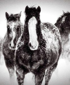 Gruppo di cavalli nella neve