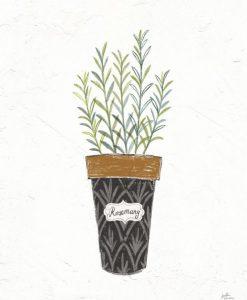 Pianta aromatica in vaso con effetto fumetto