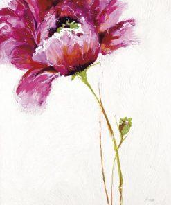 Fiore rosa su sfondo bianco