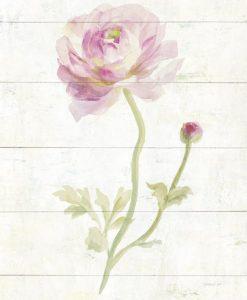 Delicato acquerello di una rosa su tavola