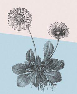 Composizione botanica con effetto grafico