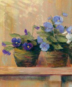 Vasi con violette