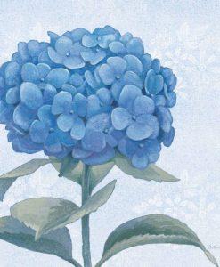 Dettaglio di una ortensia color blu